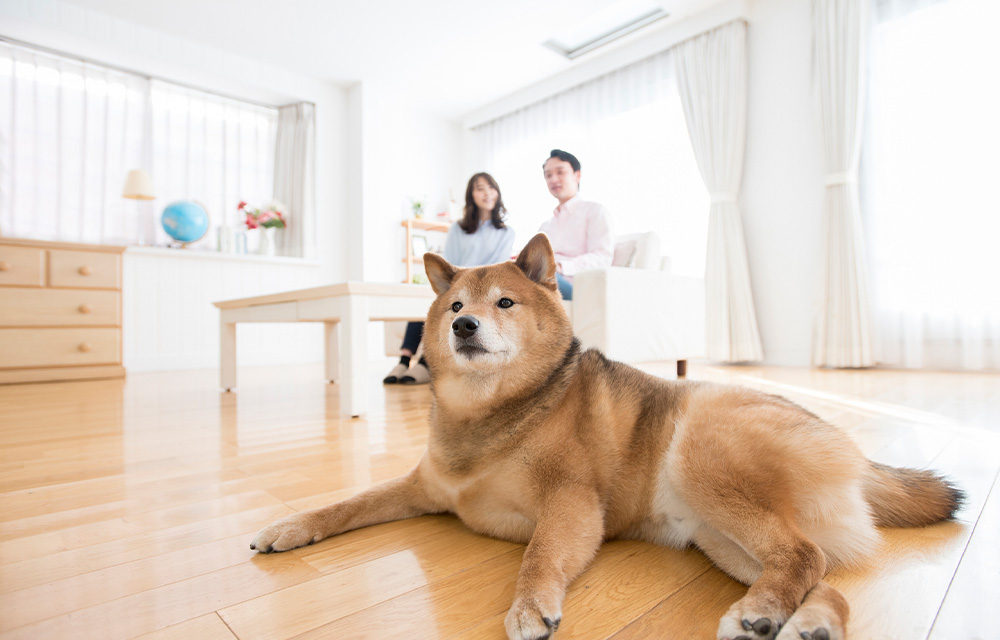 SBIプリズム少額短期 ペット保険(プリズムコール)